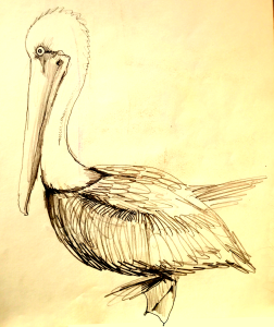 An amazing bird is the pelican, its beak can hold more than its belly can, it can hold in its beak enough food for a week, I don't know how the hell he can